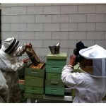 Why Our Bees are Not Just For Making San Francisco Natural Raw Honey?