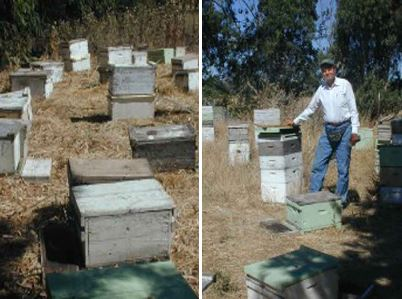 The Drought for Honey Bees | Marshall's Farm Honey