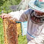Historic California Drought Hinders Honey Production