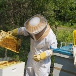 Researchers Identify Human Cause of Honey Bee Virus