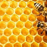 Watch a Biologist Explain How Bees Make Honey