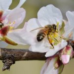 More than 1,000 Hives Were Stolen in California This Year