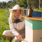 USDA Announces Partnership With Honey Bee Organizations