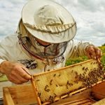 Chicago Company Helps Former Convicts Become Beekeepers