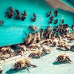 How do Honeybees Distinguish Friend From Foe?