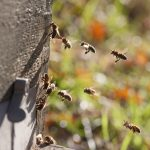 Scientists Study Honey Bees to Fight Organized Crime