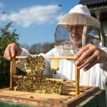 Winter Honeybee Losses Lowest in More Than a Decade