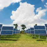 Pollinators are Finding New Homes on Solar Farms