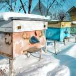 """WaggleNet"" Helps Beekeepers Monitor Their Hives in Winter"