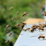 Italian Biochemist Creates Nutrient Supplement for Bees