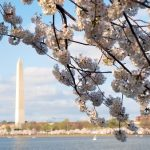 Honey Bees Are Buzzing in Our Nation's Capital