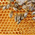 Study Suggests That Bees Can Understand Numerical Symbols