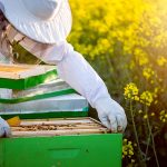Virginia Launches Free Beehive Distribution Program This Month